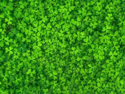 Happy St. Patrick's Day from Lemoney!