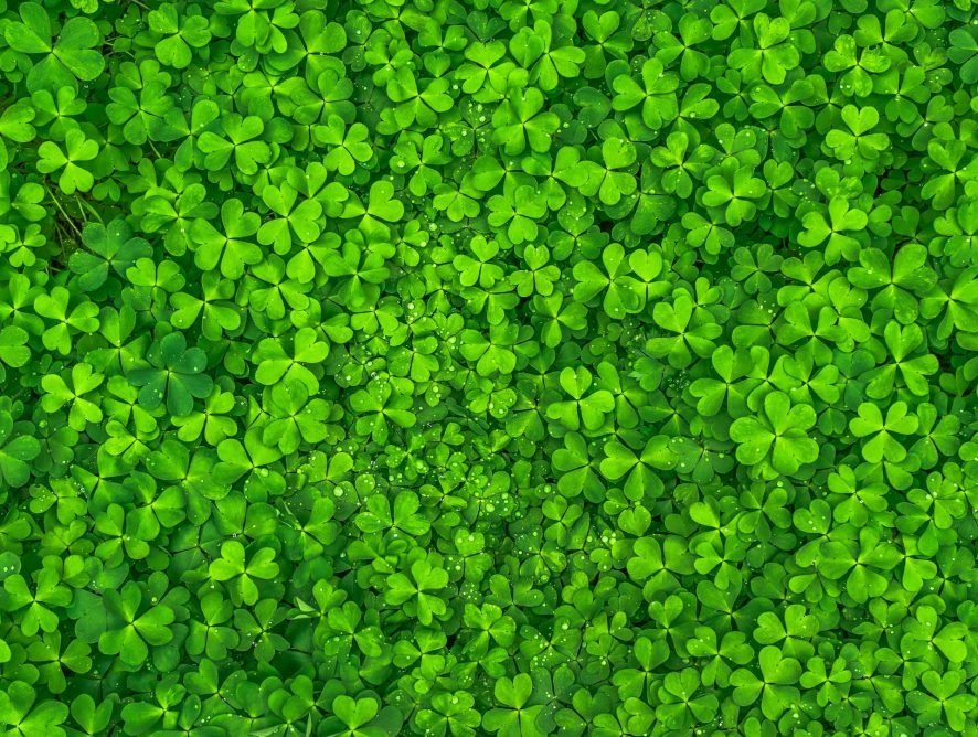 St. Patrick's Day Lucky Deals! Shop With UP TO 50% OFF