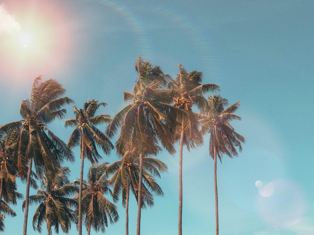 plum guide palm springs