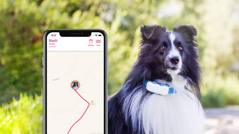 Your Pet Always Safe With Tractive GPS